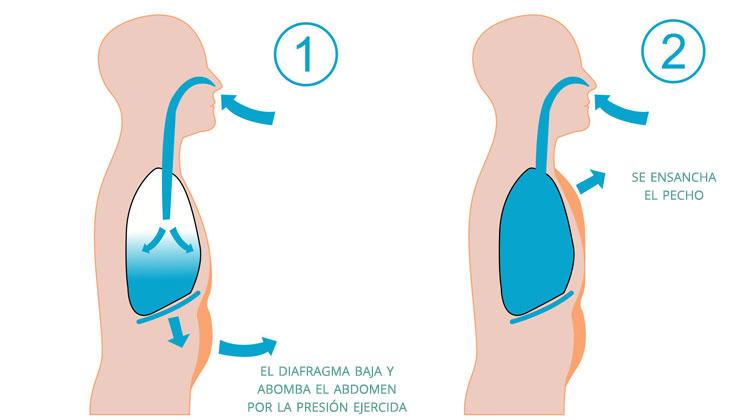 Pasos en la respiracion abdominal